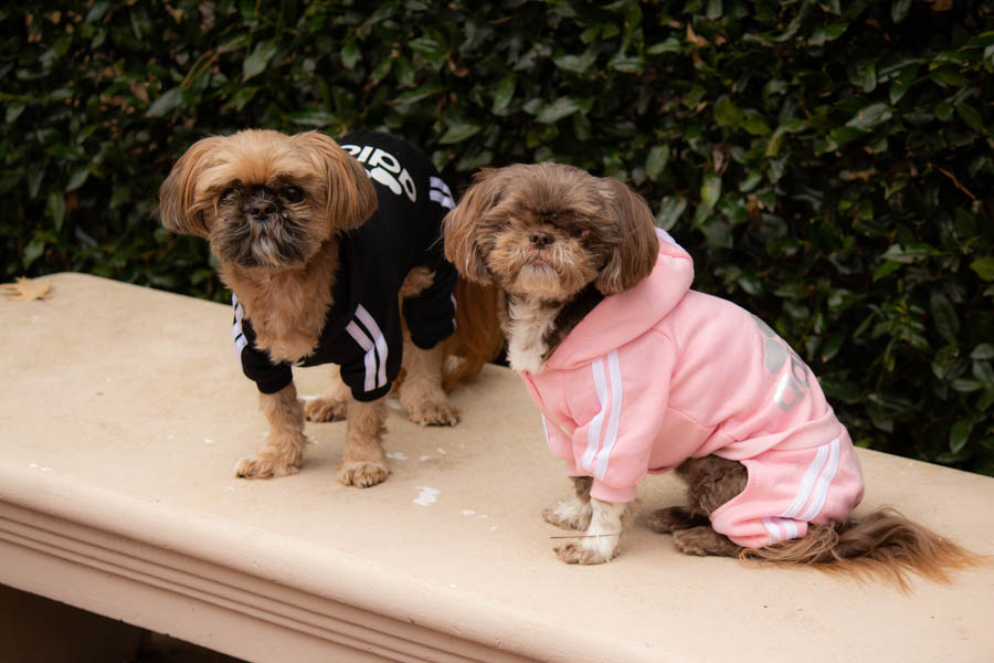 Doggy jogging suits